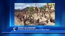 Hautes-Alpes : suite au gel exceptionnel de ce début de printemps, les vignerons demandent le soutien des élus locaux et