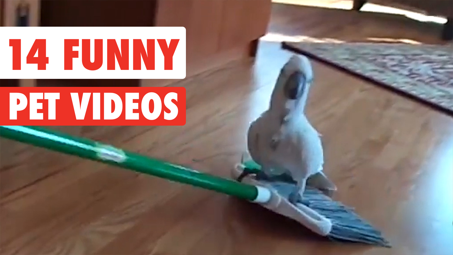 14 Funny Pets   Awesome Pet Video Compilation 2017