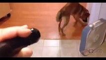 fun Best best Funny Videos Laser light caugh to animals Compilation    #5