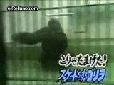 Gorila Bailarina