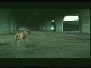 Suicide-chien1