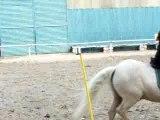 Fete du cheval PG tasse