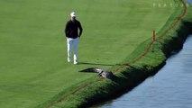 Un golfeur pousse un alligator qui s'invite sur le green d'un golf de Floride