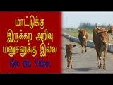 நாய் சண்டையை விலக்கும் மாடு   Cow tries to stop fight between dogs- Oneindia Tamil