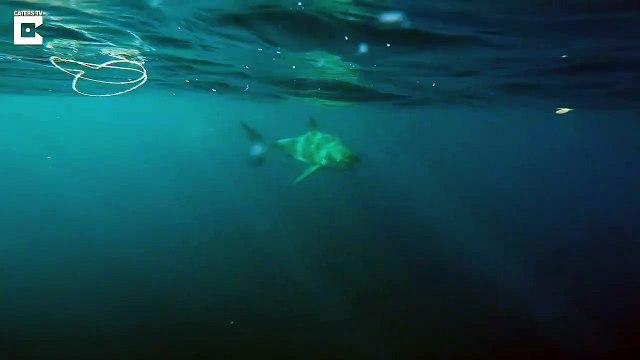 Fishermen Get Caught on Great White Shark-3GV1AuBsRgc