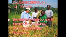 【朗報】海外「日本は俺達の希望だ」 アフリカの食を救う日本の支援に世界中から感謝の声!!アフリカの食を救うネリカ米!!!(2016.8.30)