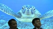 """Mort de la tortue thaïlandaise """"Tirelire"""""""