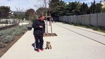 Petite staff 3 mois Educateur canin comportementaliste la ciotat 13 83 www.toutoucool13.fr