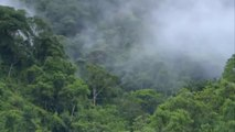 Secrets In the Amazon RainForest - National Geographic Documentary - Wildlife Animal