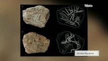 Une importante découverte préhistorique à Plougastel