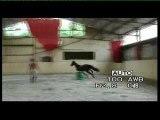 jument Qualvara horse qualvara by calvaro / voltaire for jum
