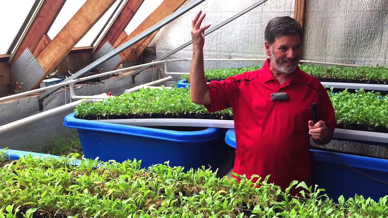 Food Sustainability With Aquaponics (All Year Round Harvest)