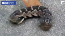 Creepy two-headed creature recoils when baffled woman pokes it _ Daily Mail Online
