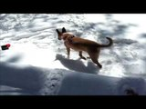 Dog playing in snow | dog plays in snow for first time Funny Video Dog
