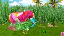 Colors Dinosaur Short Movie   Colors Dinosaurs Finger Family Children Nursery Rh