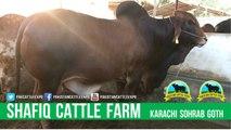 360 || Amazing Qurbani cow || Bakra eid in karachi, Pakistan || Cow mandi || Shafiq Cattle Farm