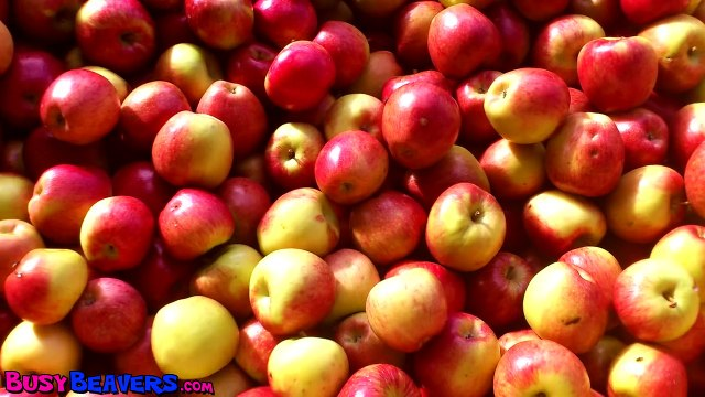 Apples Are Yummy - Learn Fruits & Vegetables, Kids Song for Babies & Toddlers Go vegan :-)