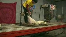 D!CI TV : Speed Shear, 1er concours de rapidité de tonte à Savournon