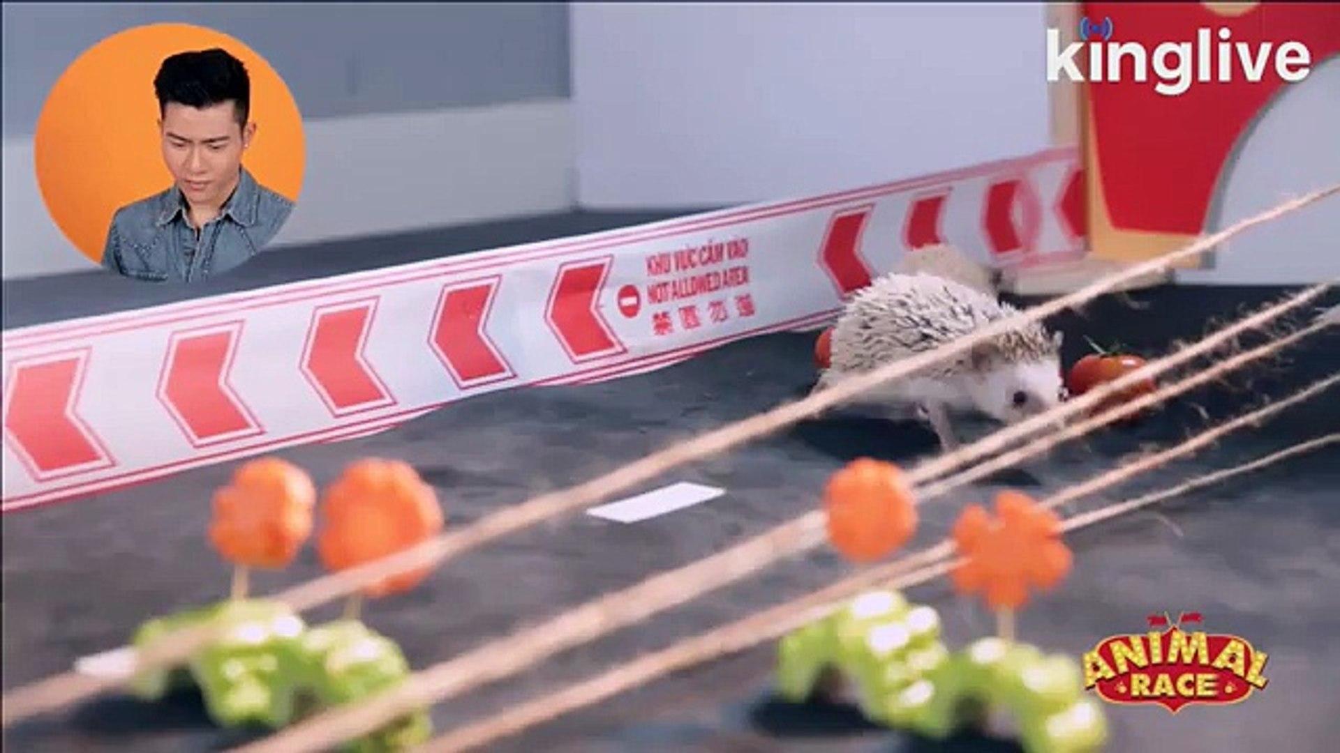Animal Race - Đường đua muôn thú số 3: Lệ Loan và Lệ Liễu chính là hai tay đua tại số 3