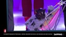 Vivement Dimanche Prochain : Michel Drucker accueille un cochon sur son plateau (vidéo)