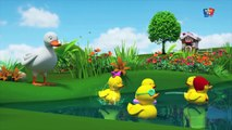 Five Little Ducks Rhyme | cinq petits canards riment | garderie comptines compilation