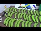 Spanish Authorities Seize Cocaine Hidden in Fake Bananas