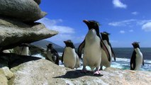 Penguin Fail - Best Bloopers from Penguins Spy in the Huddle (Waddle all the Way) http://BestDramaTv.Net