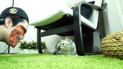 Cats' Reaction to A Cat Print Facial Mask 고양이 마스크팩을 했을때 고양이들 반응