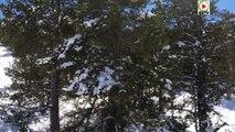Andorre: Neige fraiche de Mars - Andorra Snow TV