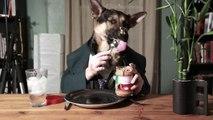 Ce chien mange comme un homme... Hilarant !