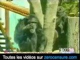 Le singe qui fume