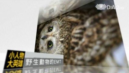 Unsung Heroes - Wildlife Savers - promo