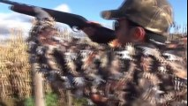 Argentina Dove Hunting,Chasse Pigeons,Pigeon Shooting
