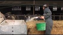 EMPLOI/ Pénurie de main d'oeuvre agricole en Touraine