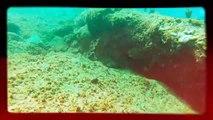 """Diving in Manati, Puerto Rico. """"Mar Chiquita"""""""