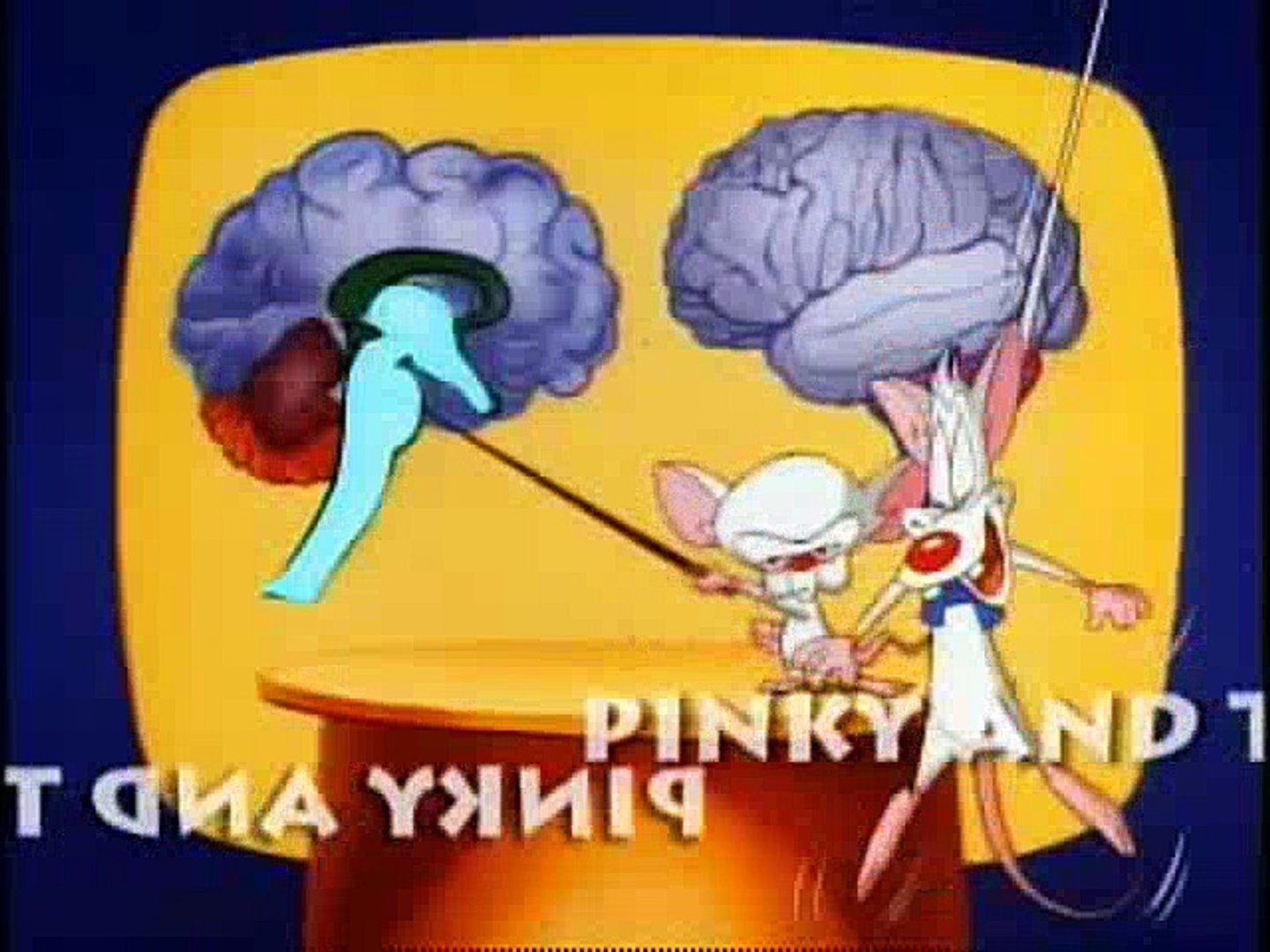 Pinky And The Brain  The Third Mouse, The Visit