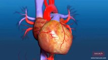 What is the Process of Aortic Valve Replacement Surgery? | SurgeryLog