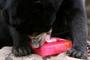 Glaces à l'eau et bains à gogo pour ces animaux du zoo de Bangkok