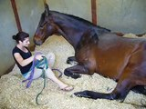 girl and horse bond