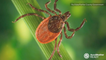 Tick season: Beware of these different types of ticks