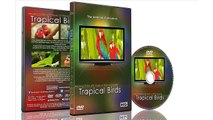Relaxation DVD - Tropical Birds with Music or Nature Sound Calming Scenes of Pure Nature for Dogs and Cats and Happy Peo