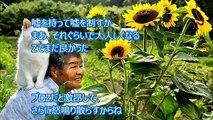 【すごい日本人】日本のおばあちゃんが韓国人の虚言を完全論破!空気の読めない韓国人を黙らせたw「そういう事も考えた方がいいよ」韓国人の乱暴狼藉に驚愕する 韓国人の立入禁止がこのままで