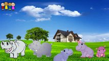 Cartoo  Cabbage Finger Family Rhymes in English   Family Finger Song