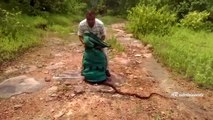 Crazy Moment Snake catcher releases Hundreds of Rat Snakes, Cobras and Vipers into forest