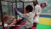 Émirats arabes unis : des animaux sauvages comme animaux de compagnie