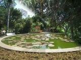 Iles Canaries (15/16) orotava et jardin botanique