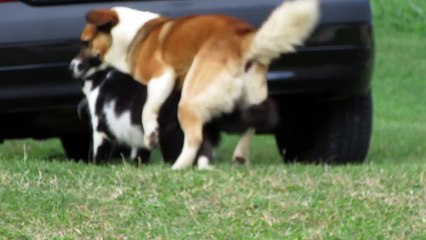 CAT AND DOG MATING - BREEDING