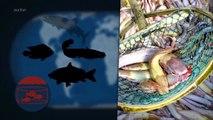 Le Dessous des cartes - Des océans sans poissons