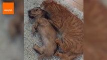 Cat Loves Cuddling Puppy
