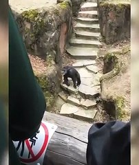 Vu le caca qu'elle a reçu en pleine face, cette mamie n'ira surement plus voir des singes au Zoo... (Vidéo)